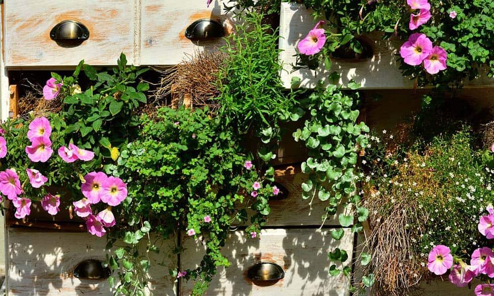 Cum pregatim plantele de balcon pentru sezonul rece