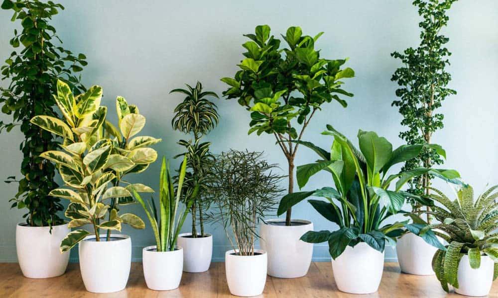 Plante de interior care te scapa de alergii