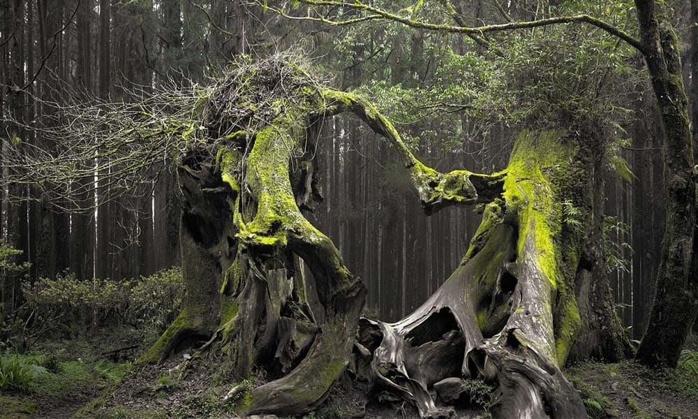Padurea Hoia-Baciu, obiectivul turistic paranormal al Clujului